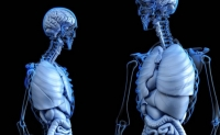 Corpul uman Curiozitati