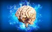 Creierul uman Curiozitati