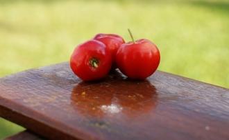 Informatii despre Acerola