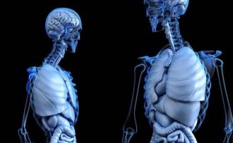 Informatii despre Corpul uman
