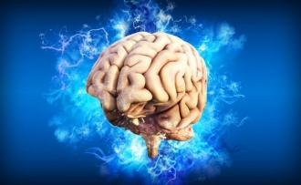 Informatii despre Creierul uman