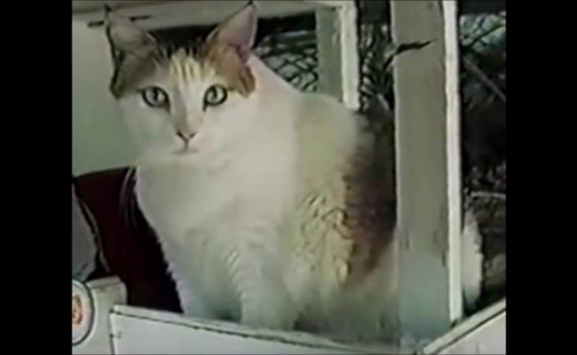 Ce pisica a trait cel mai mult?