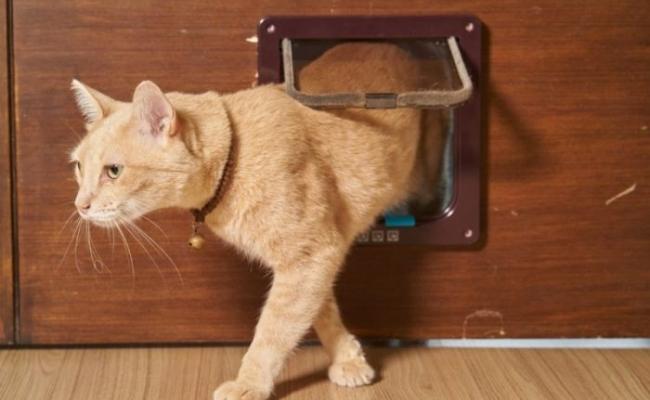 Cine a inventat usa de animale?