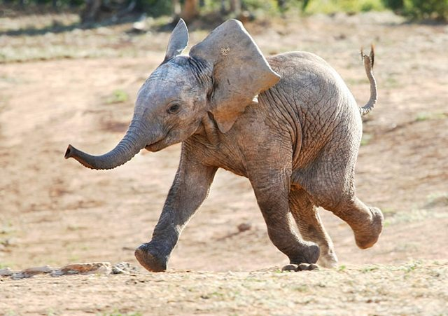 care este vederea unui elefant viziune nocturnă în timp ce conduceți