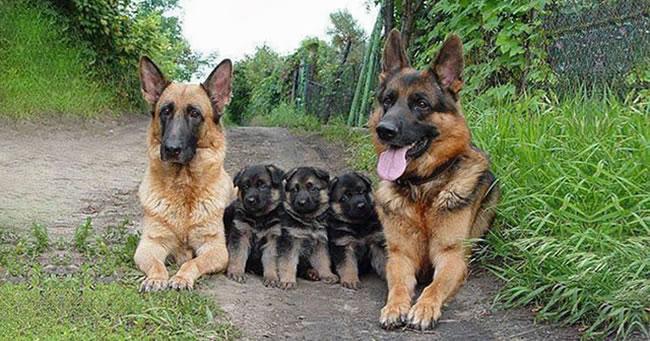 Portrete adorabile de familie cu animale
