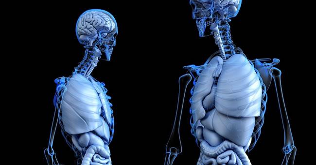 110+ Curiozități și informații fascinante despre Corpul Uman