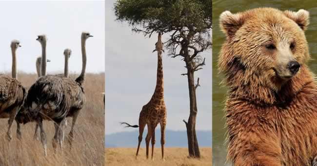 Top cele mai inalte animale din lume