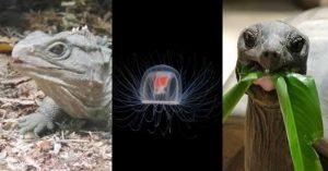 Top cele mai longevive animale de pe Pamant
